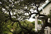 House with live oak tree