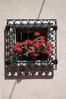Potted red geraniums peeking through iron bars on sunny window sill