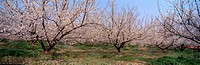 panoramic view, landscape, spring, season, scenery, panorama, nature