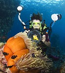 Underwater photographer photographing Red Sea clownfish, with sea anemone, blue background, Egyptian Red Sea 30_9_07