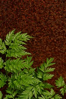 vegetation, wild, yield, fleshy, organic, foliage