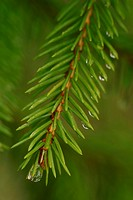 Drop, droplet, moisture, water, vegetation, wild (thumbnail)