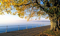 Colored, autumn, calf, bregenz, banks, evening light, austria (thumbnail)