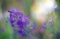 weinviertel, austria, blue, calf, dainty, flora, flower meadow