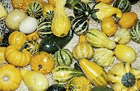 background, CLOSE, close_up, cucurbita