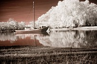 Blossom, bathe, blooms, bloom, beauty, boat, atmosphere (thumbnail)