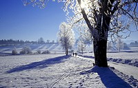 cold, day, frost, hoarfrost, idyllic, landscape