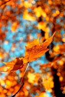 daylight, background, czech, CLOSE, branches, leaf, autumn