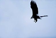 wild animal, nature, flying, sky, scene, animal, landscape