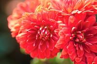 blossom, plants, bloom, flowers, flower, plant