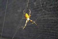 anthropoda, insect, anthropods, arthropod, animal, spiders, spider