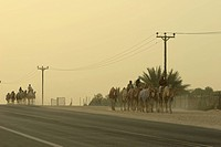 Road, camels, street, traditional, life, arabic (thumbnail)