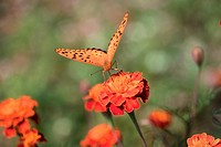 Plants, plant, betterfly, insect, flower, flowers, nature (thumbnail)