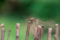 autumn, nature, dragonfly, insect, animal, arthropod, branch
