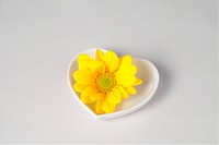interior, plate, house item, ceramic, dish, flower