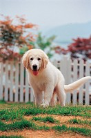 Canine, 35mm, domestic animal, petdog, animal, domestic dog, film (thumbnail)