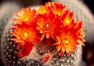 Orange flowers, nature, flowers, flower, scene, wildflower, landscape (thumbnail)