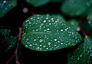 dewdrop, nature, leaf, tree, scene, waterdrop, landscape