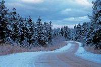 snow, nature, winter, road, scenery, scene, tree