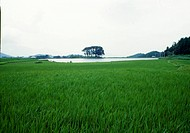 rural area, natue, reservoir, tree, scene, farmland, landscape