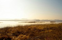 Eulalia, river, plant, scenery, nature, plants, sunrise (thumbnail)