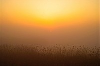 plants, nature, eulalia, plant, scenery, grass, sunset