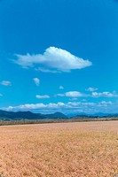 field, cloud, sky, landscape, scenery, nature