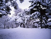 plant, snow scene, snow, season, winter, winter scene