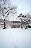 tree, scenery, snow, park, winter, cold, nature