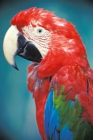 Close up portrait of Parrot