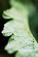 Leaf, extreme close-up (thumbnail)