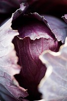 Red cabbage, extreme close_up