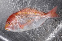 Sea bream (thumbnail)