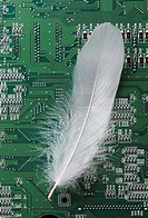 Feather and circuit board (thumbnail)