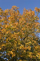 Blue, Day, Clear Sky, Branch, Autumn