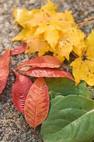 Autumn, Focus On Foreground, Day, Close-Up, Assortment (thumbnail)
