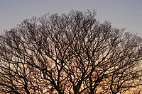 Bare Tree, Dusk, Clear Sky, Branch, Autumn
