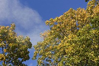 Branch, Green, Day, Cloud, Autumn