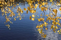 Blue, Flowing Water, Day, Branch, Autumn