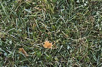 Day, Grass, Full Frame, Directly Above, Autumn