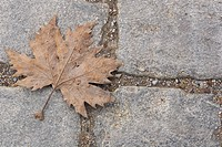 Close_Up, Dry, Day, Concrete, Autumn