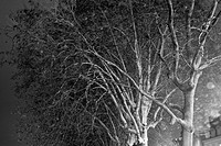 B&W, black and white, tree, branches, leaves, tree branch