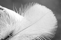 texture, feather, close_up, appearance, plume, plumage