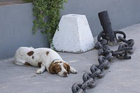 Chain, Floor, Dog, Day, Adult Animal