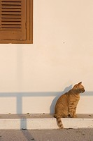 Cat, Domestic Cat, Domestic Animals, Day, Adult Animal