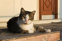 Cat, Day, Domestic Animals, Domestic Cat, Door
