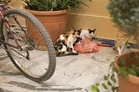 Animal Family, Day, Cat, Bicycle, Adult Animal