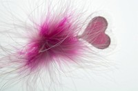 Dart, Feather, Heart Shape, Indoors