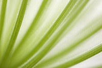 Botany, Chlorophyll, Close_Up, Design, Detail