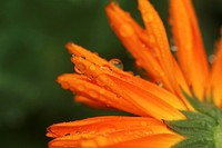 stamen, petal, plant, grow, close_up, natured